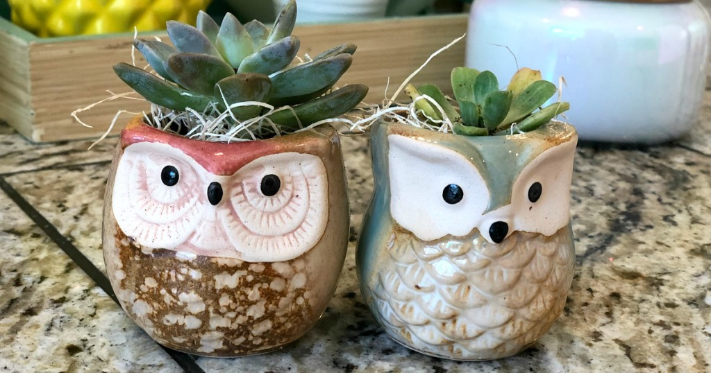 gift guide for homebody — succulents in owl planters