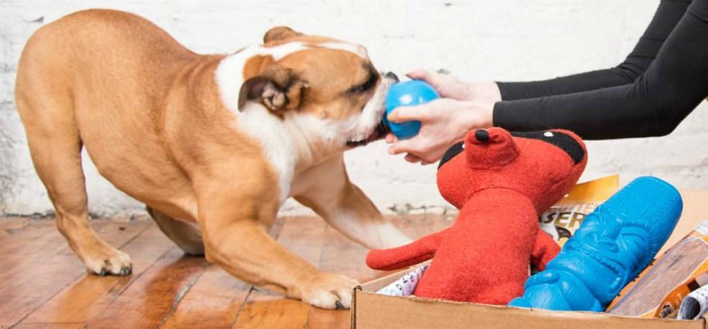 BarkBox extra toys