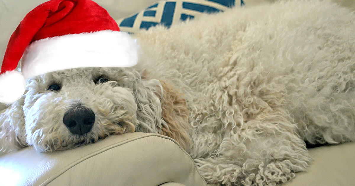 barkbox subscription deal – puppy wearing a Santa hat