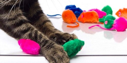 Amazon: Hartz Kitty Frenzy Cat Toys 12-Count Only $2.84 Shipped (Regularly $8)