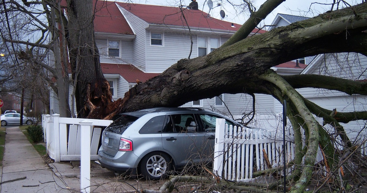 car with tree fallen on top of it