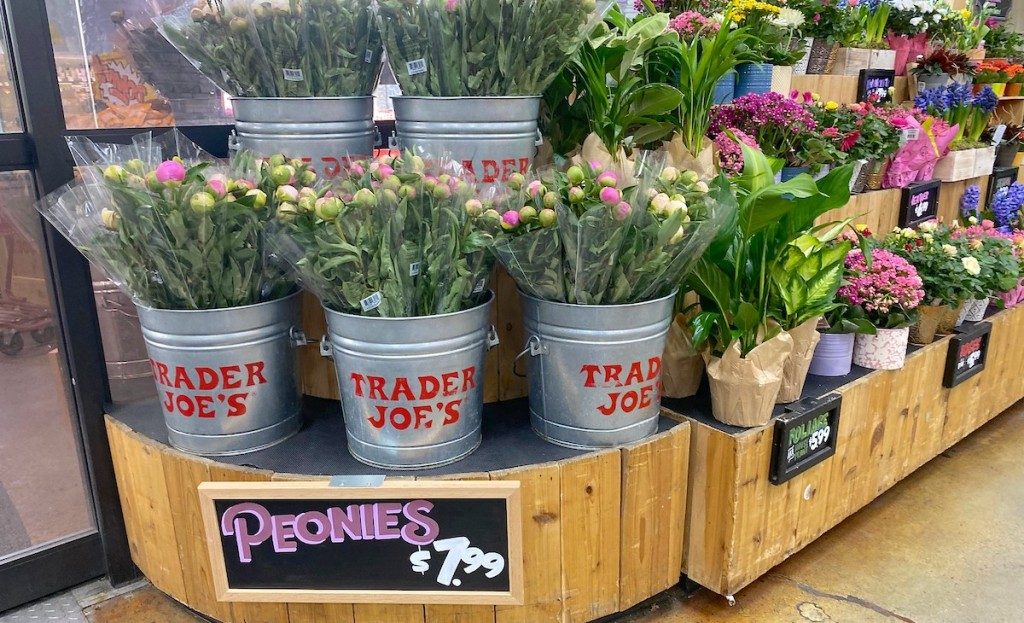 peony flowers in trader joes buckets