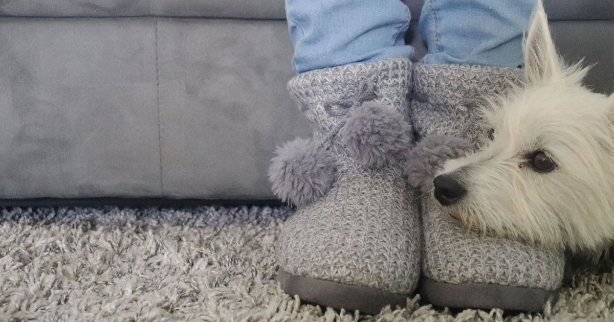 dog resting his face on Isotoner slippers