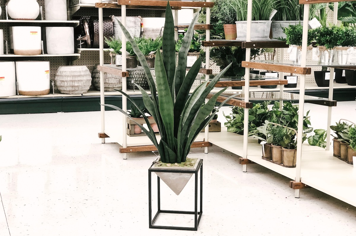 modern geometric plant at hobby lobby