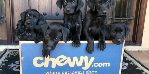 Buy One, Get One FREE True Acre Dog Treats AND American Journey Dog Food at Chewy.com