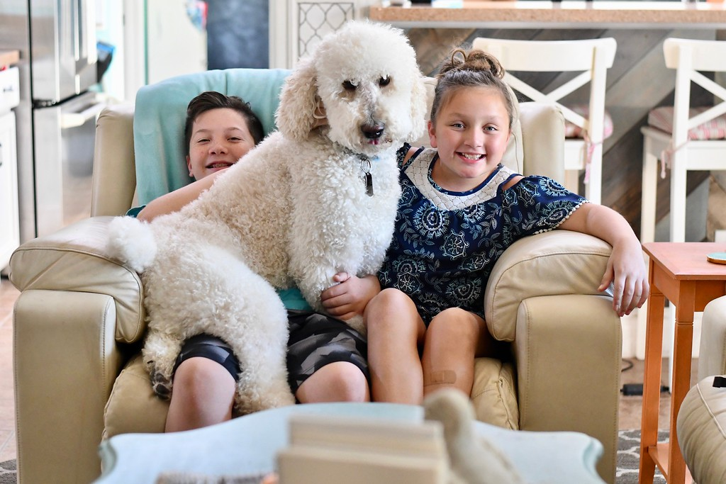 Lina's standard poodle Chewy sitting on her kids' laps