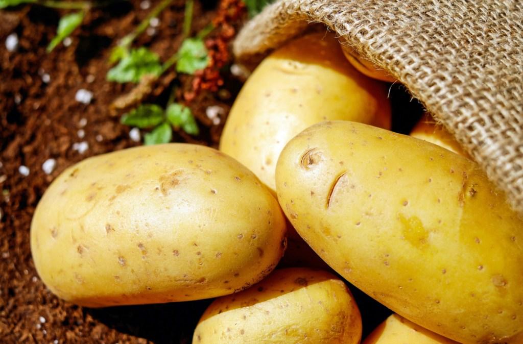 yellow potatoes on ground