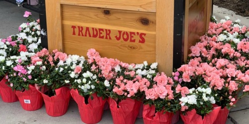 Affordable Flowers Available at Trader Joe's