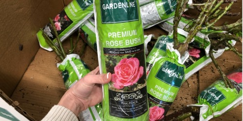 5 of Our Favorite Spring Gardening Items at ALDI