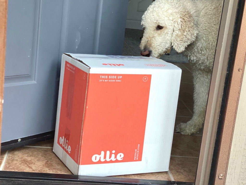 Dog checking out dog food delivered package in doorway
