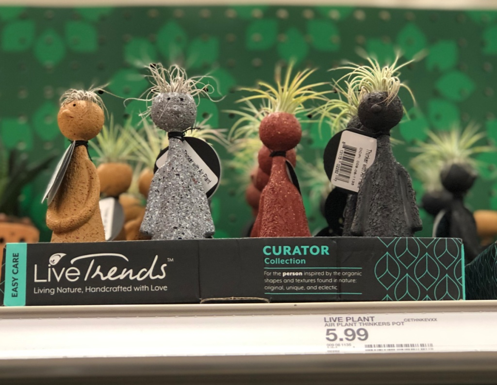 box of air plant thinkers in store