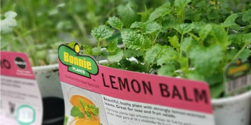 Bonnie Vegetable or Herb Plants Only $2.50 at Home Depot & Lowe's