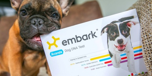 Amazon: Embark Dog DNA Test Kit Only $129 Shipped (Regularly $199)