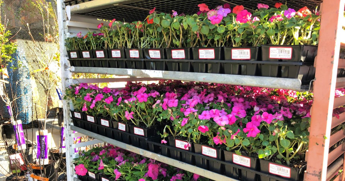 rows of flowers on display carts at home depot