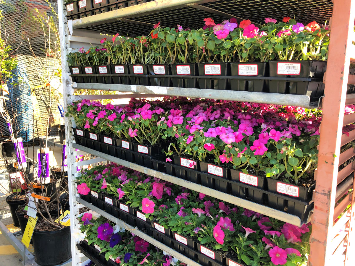 home depot flowers sale