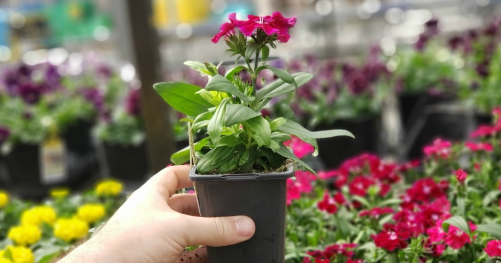 Home Depot Memorial Day Sale 1 Annuals 2 Mulch Bags More