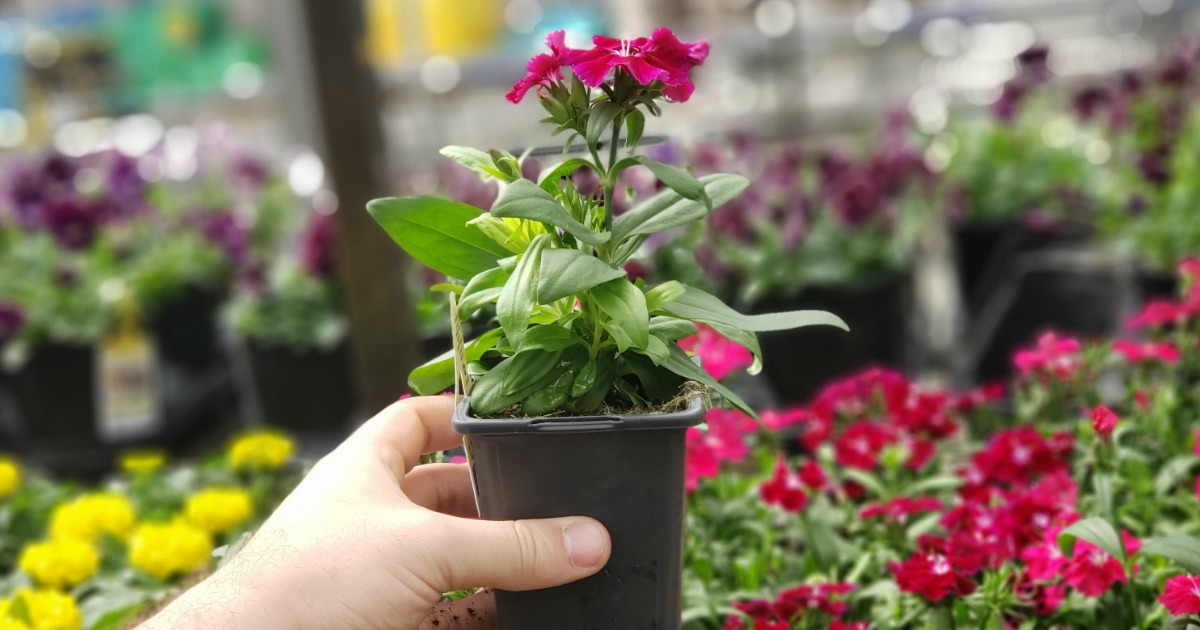 Home Depot Memorial Day Sale | $1 Annuals, $2 Mulch Bags, & More
