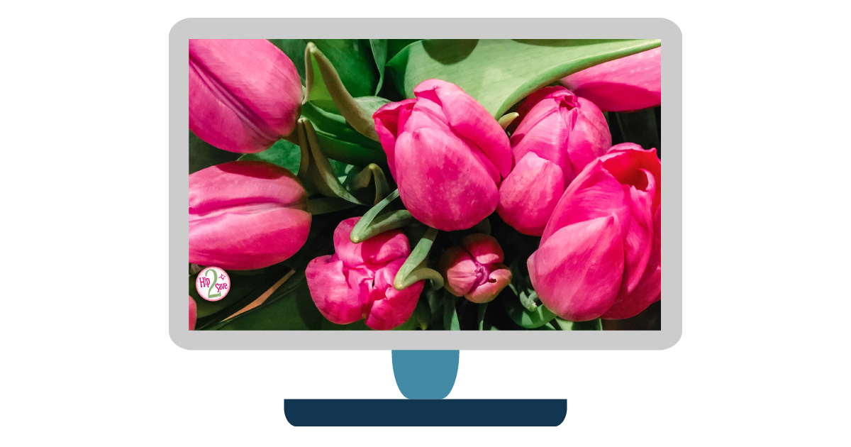 digital wallpapers — tulip flowers desktop background