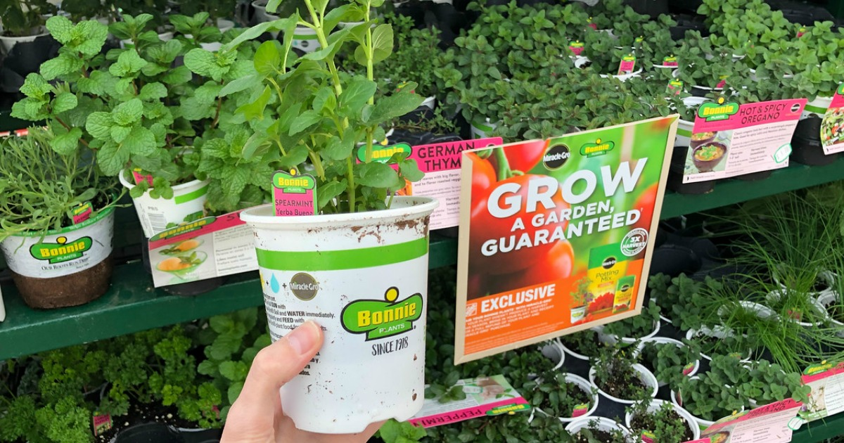 Bonnie Vegetable & Herb Plants Just $1.89 at Home Depot (In-Store Only)