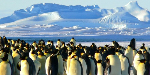 National Geographic Polar Explorations Season 1 Digital HD Download Just 99¢ on Amazon + More