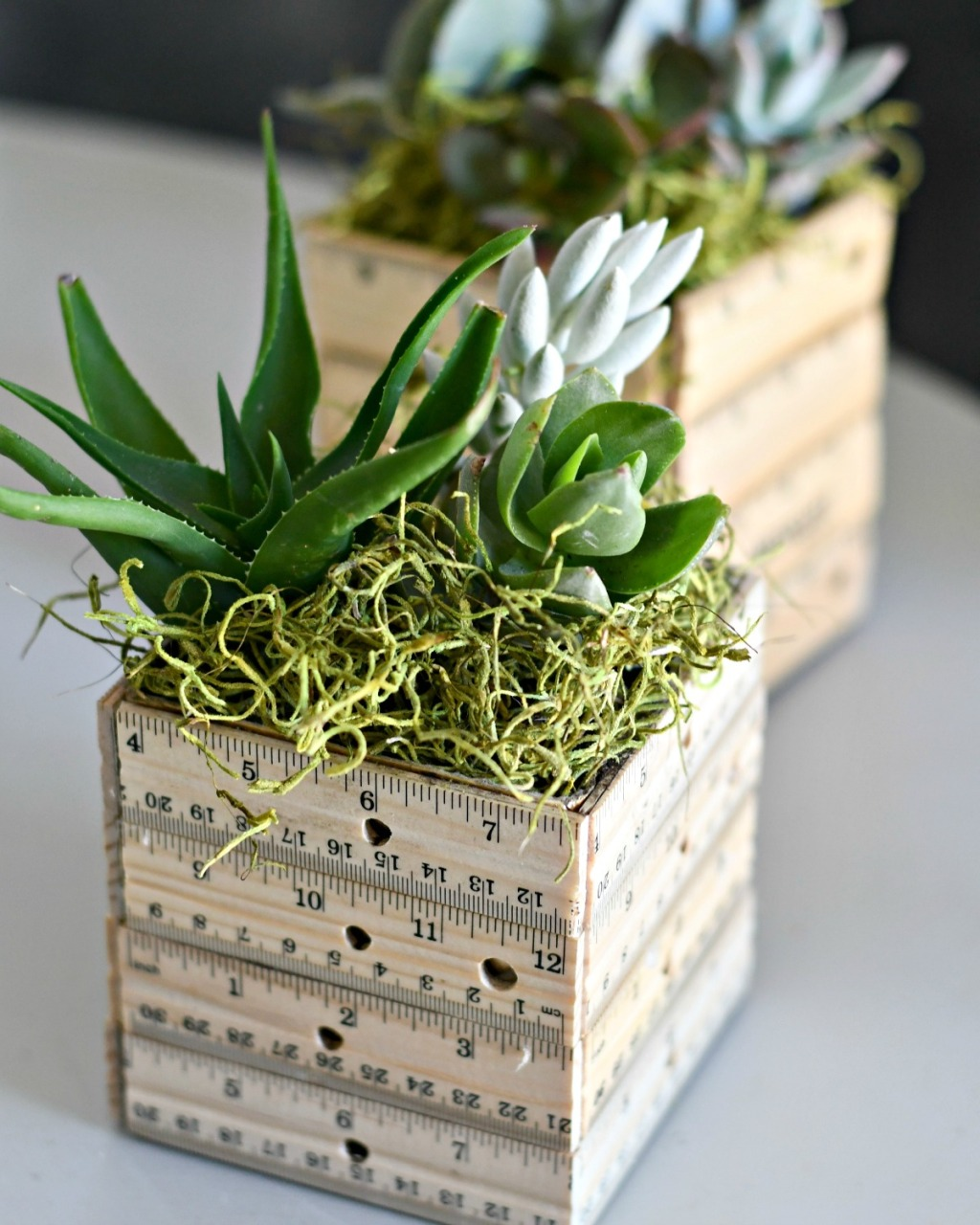 ruler planter with succulents and moss inside on a table