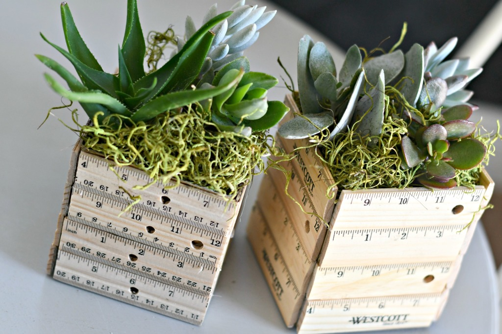 living succulents planted inside a milk carton on the table
