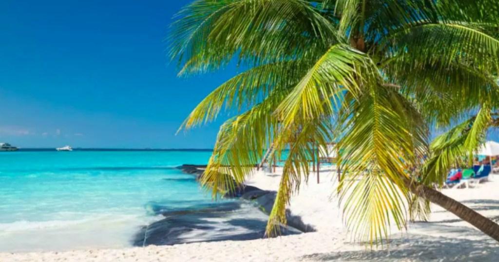 Palm Tree on Dominican Republic Beach