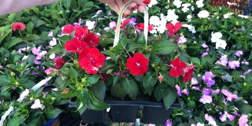 12-Pack Annuals Only 2/$10 at Home Depot (Just $5 Each)