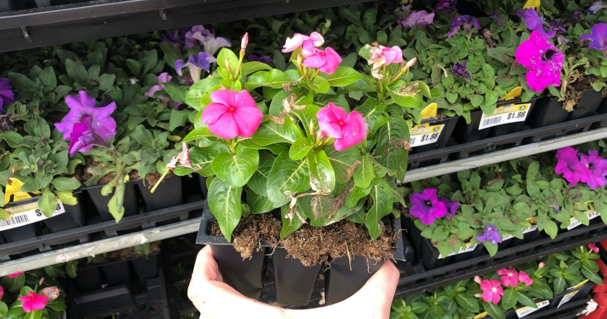 Lowes Memorial Day Sale 88 Annuals 2 Mulch 25 Pavers More