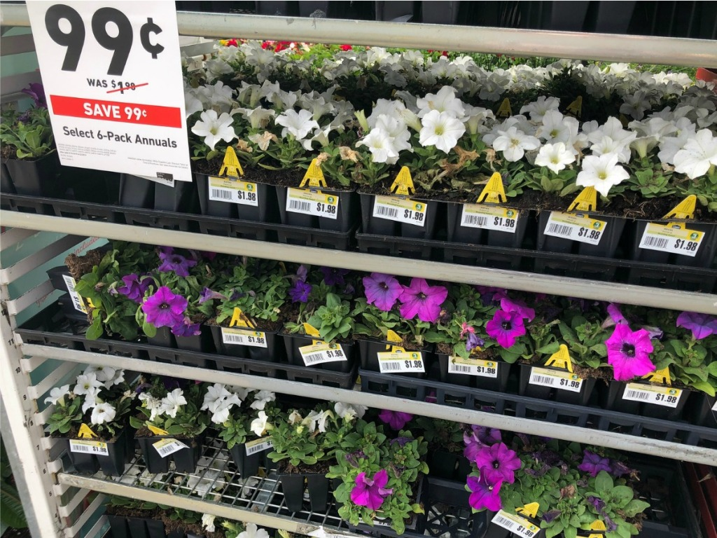Lowe S Memorial Day Sale 99 Annuals 25 Pavers More A