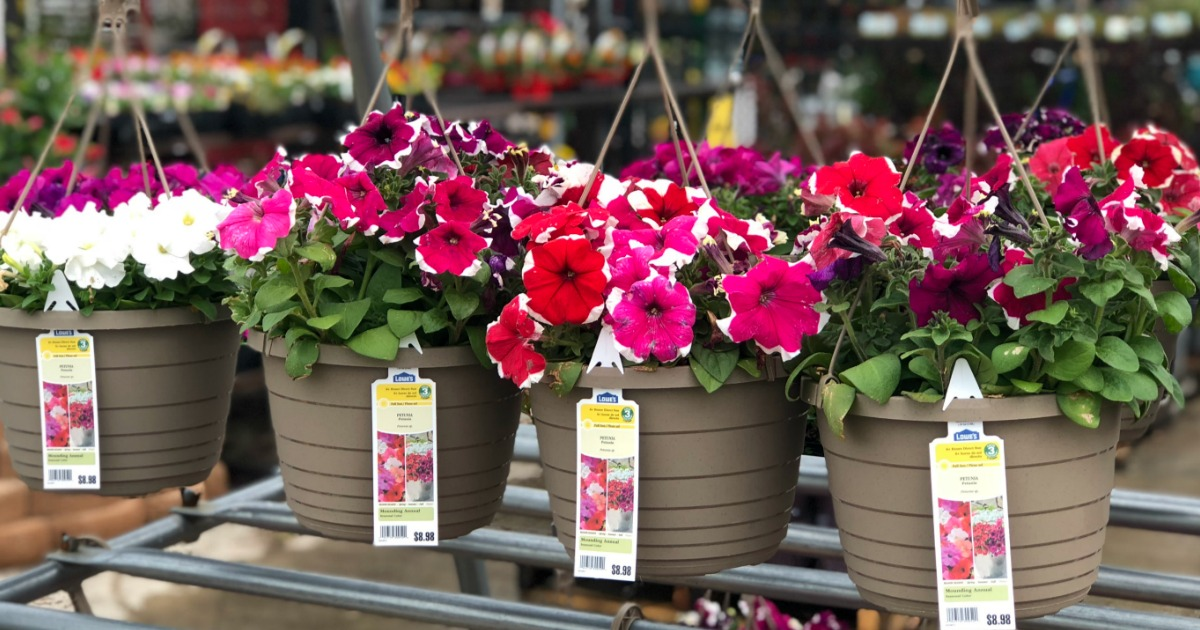 Hanging Flower Baskets of pink, white, red and purple flowers at Lowe's