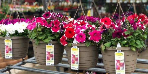TWO Hanging Baskets Only $10 at Lowe's (Just $5 Each) + More