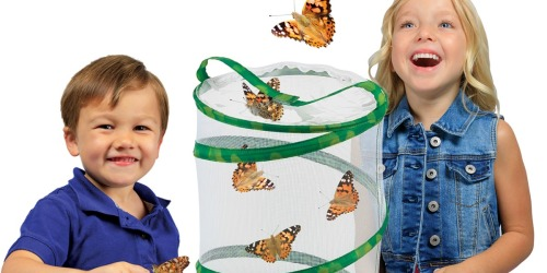 Insect Lore Butterfly Garden w/ LIVE Caterpillars Only $19 at Amazon