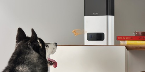 Petcube Bites Camera & Treat Dispenser Only $129 Shipped (Regularly $249)