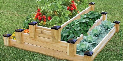 Tiered Cedar Garden Bed Only $79.98 at Sam's Club (Regularly $159)