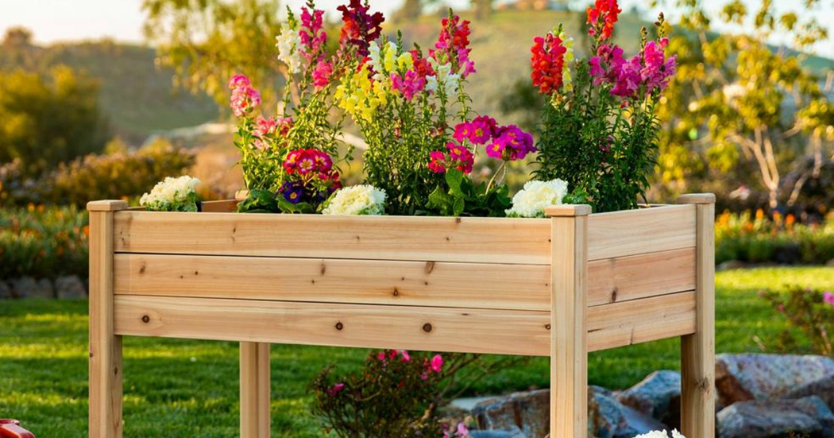 raised garden bed filled with bright flowers