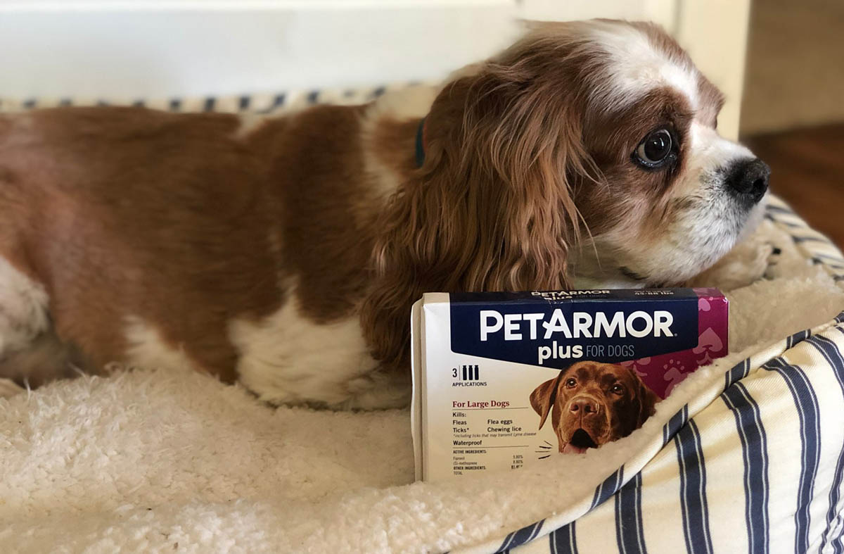 PetArmor Plus for Dogs with dog in background