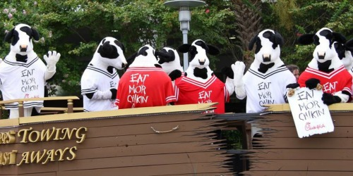 Chick-Fil-A Cow Day Has Been Postponed