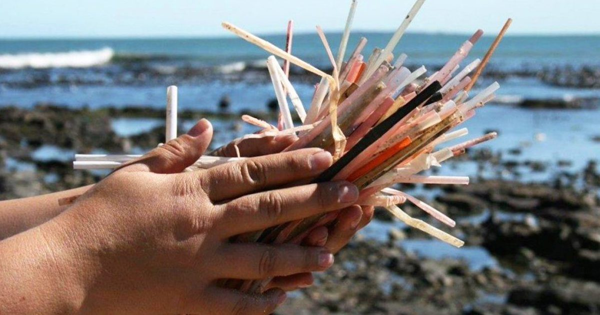 hand holding pile of dirty straws at beach