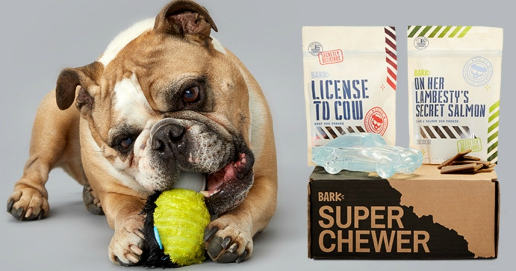 english bulldog chewing toy next to super chewer box with treats and toys on top of box