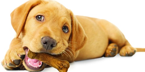 Nylabone Dog Chew Treats as Low as $3.67 Shipped at Amazon