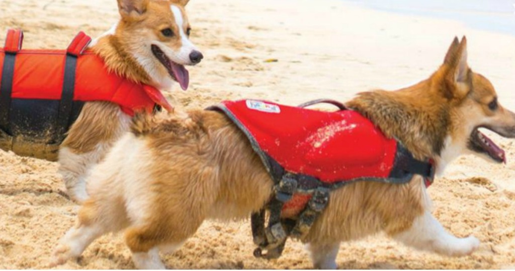 dogs wearing life jacket