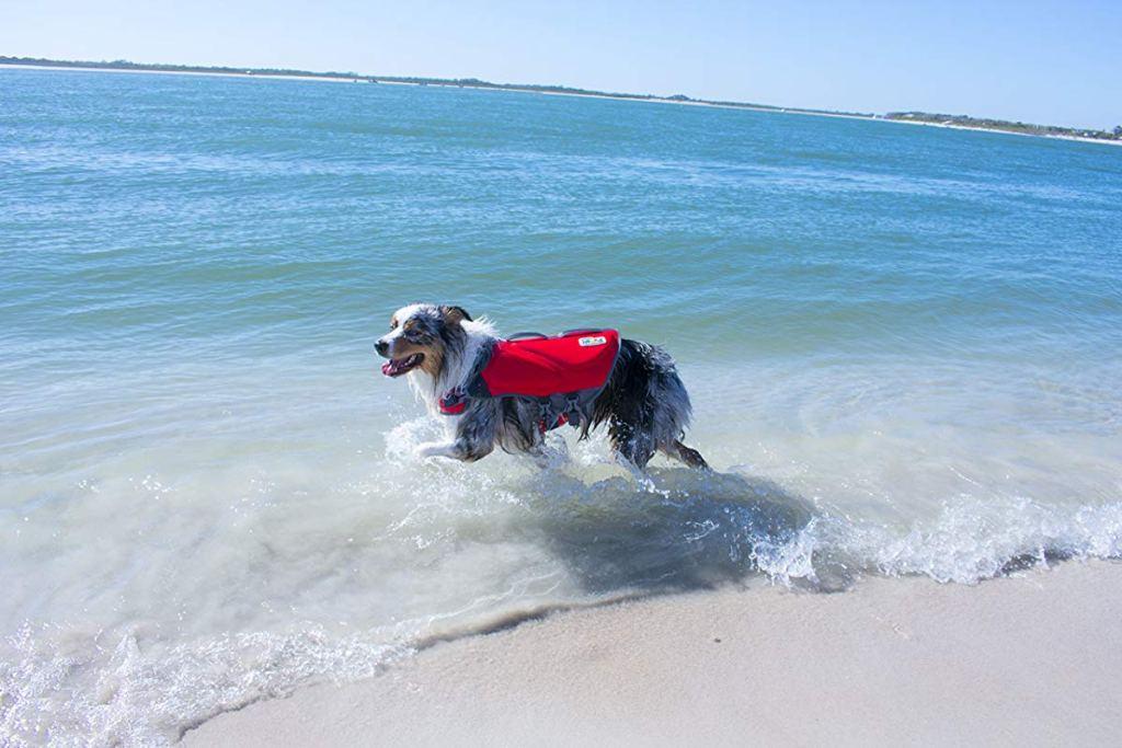 dog wearing life jacket