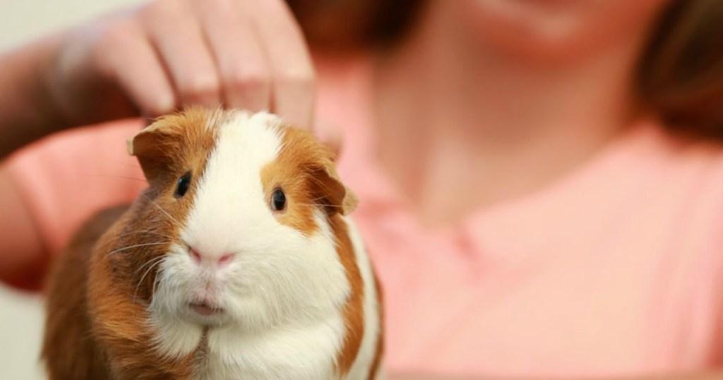 girl petting guinea pig