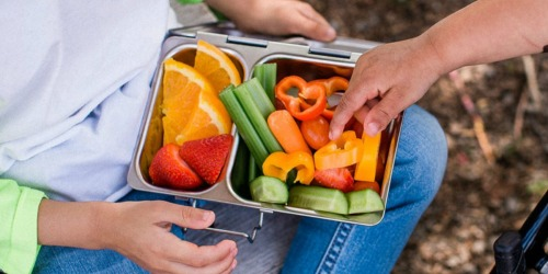Rare 25% Off PlanetBox Promo Code | Save on Quality Eco-Friendly Lunchboxes for Kids