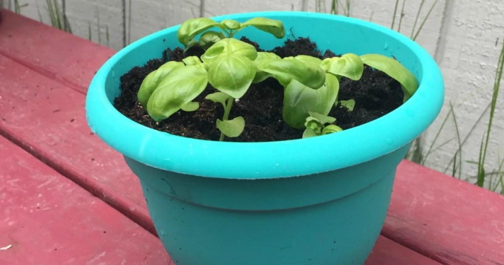 teal colored planter with small plants