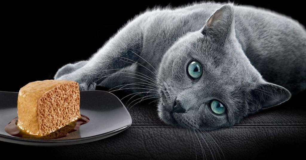 cat with plate of sheba cat food