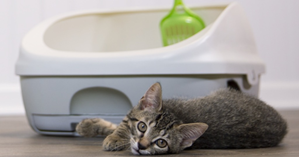 Purina Tidy Cats Litter system with a cat