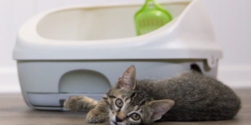 Purina Tidy Cats Breeze Cat Litter Box System Only $16.50 at Amazon (Regularly $33)