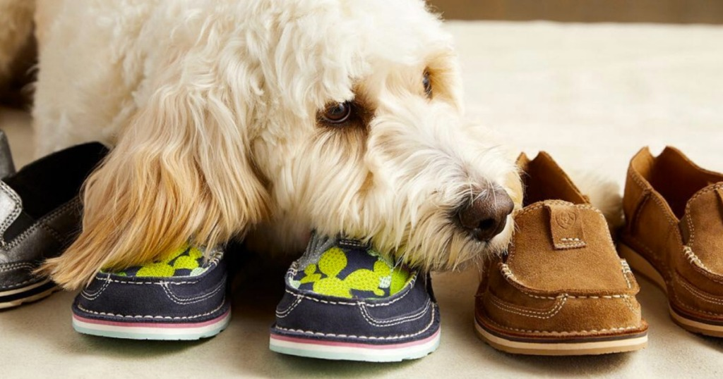 Dog resting head on a cactus print pair of Ariat Women's shoes